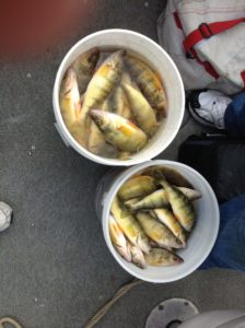 Perch Fishing Charters | Comfort Zone Charters